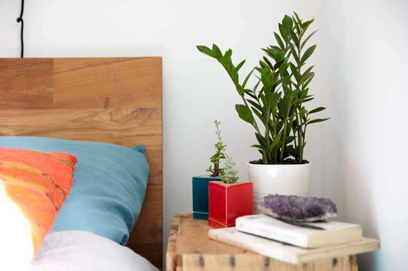 House Plant for a Healthy Life